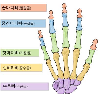 엄지손가락통증5.jpg